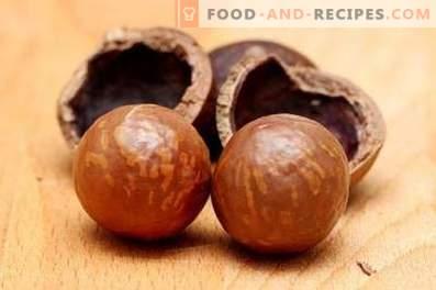 Макадамија орев: корист и штети