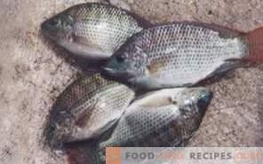 Риба тилапија: корист и штета