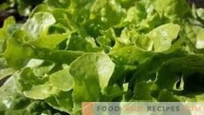 Како да зачувате лист зелена салата